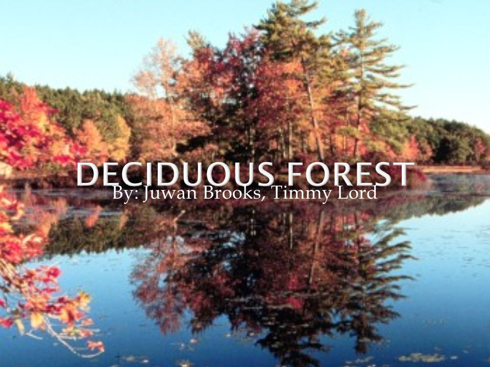  Deciduous forests can be found in the eastern half of North America, and the middle of Europe.