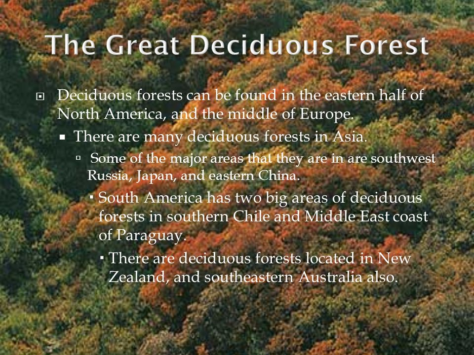  The average annual temperature in a deciduous forest is 50° F.