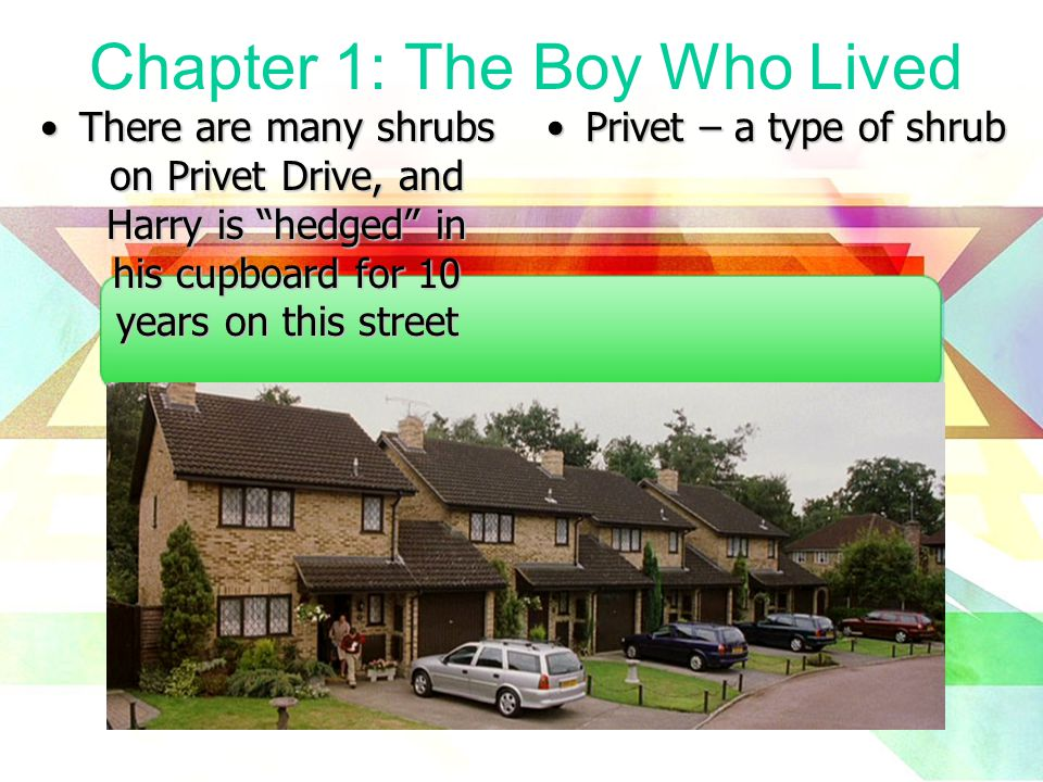 Chapter 1: The Boy Who Lived There are many shrubs on Privet Drive, and Harry is hedged in his cupboard for 10 years on this streetThere are many shrubs on Privet Drive, and Harry is hedged in his cupboard for 10 years on this street Privet – a type of shrub