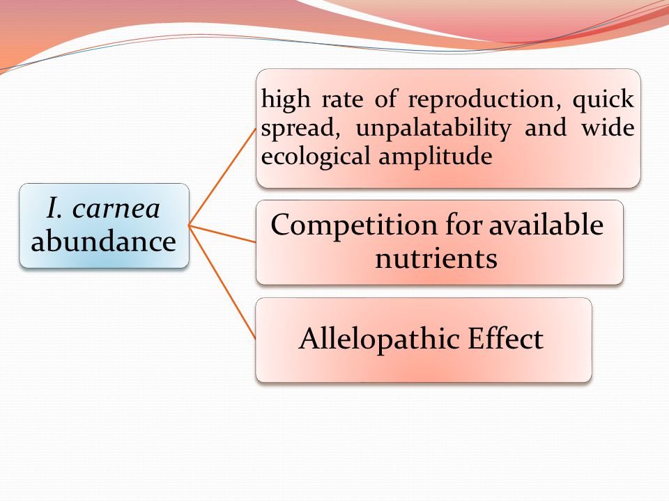 I. carnea abundance high rate of reproduction, quick spread, unpalatability and wide ecological amplitude Competition for available nutrients Allelopa