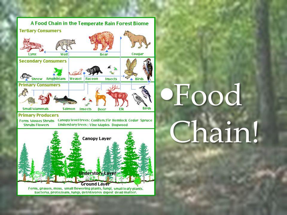 Food Chain! Food Chain!