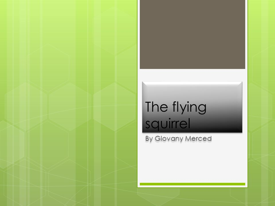 The flying squirrel By Giovany Merced