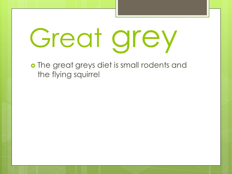 Great grey  The great greys diet is small rodents and the flying squirrel