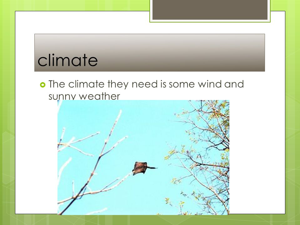 climate  The climate they need is some wind and sunny weather