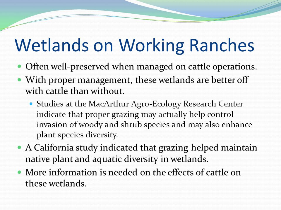 Wetlands on Working Ranches Often well-preserved when managed on cattle operations.