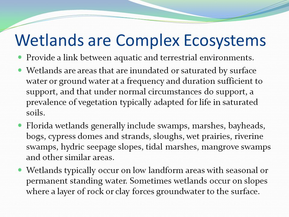 Wetlands are Complex Ecosystems Provide a link between aquatic and terrestrial environments.