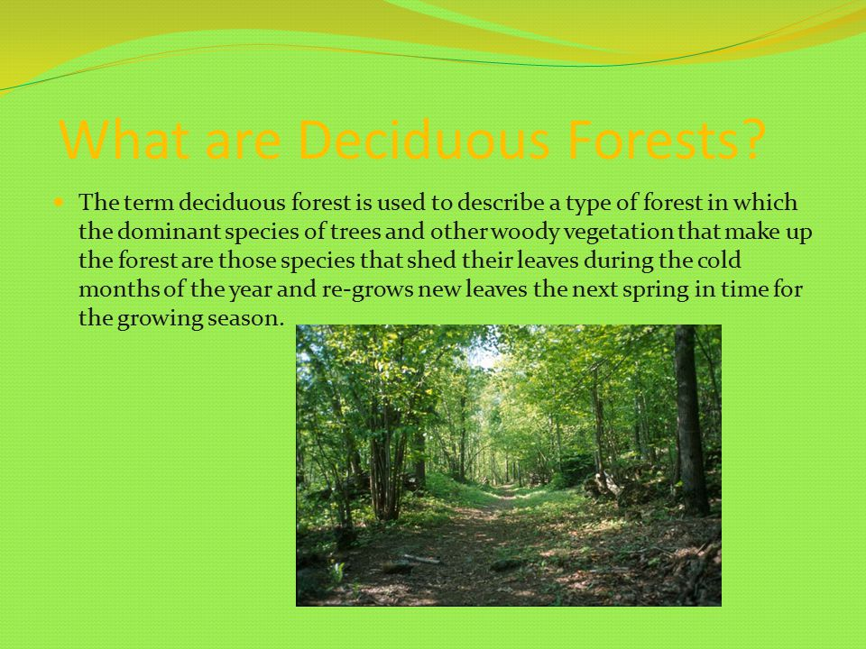 What are Deciduous Forests.