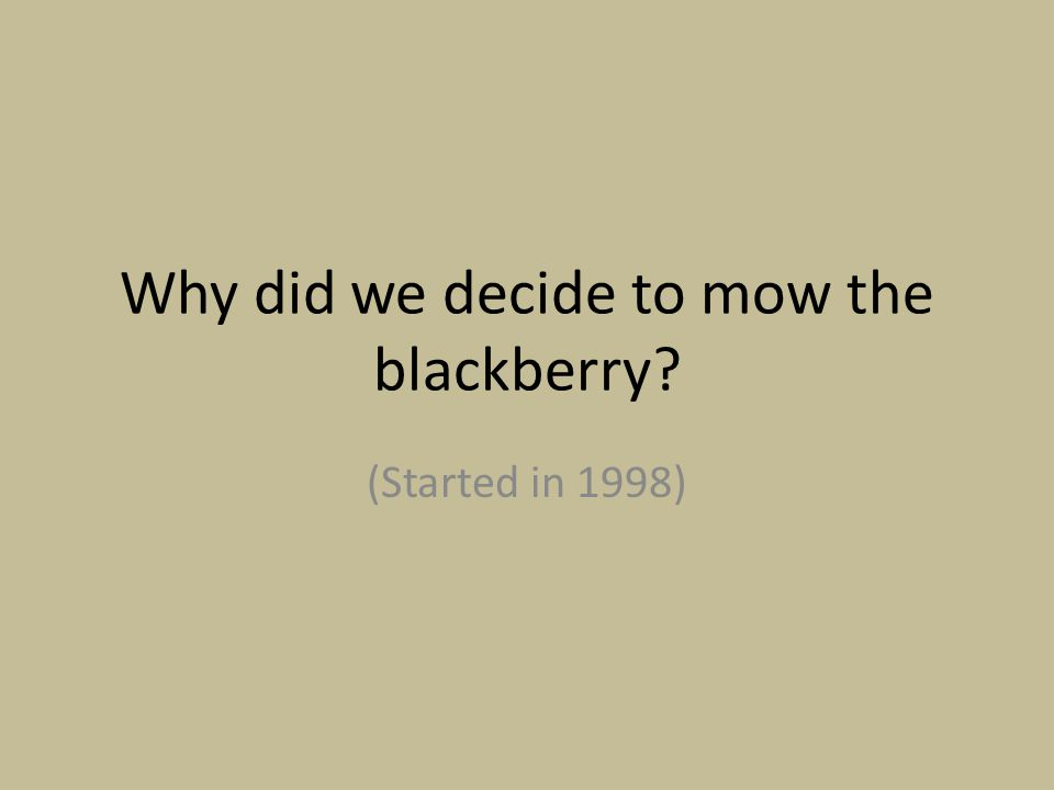 Why did we decide to mow the blackberry? (Started in 1998)