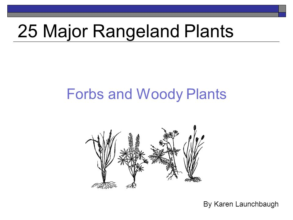 Forbs and Woody Plants 25 Major Rangeland Plants By Karen Launchbaugh