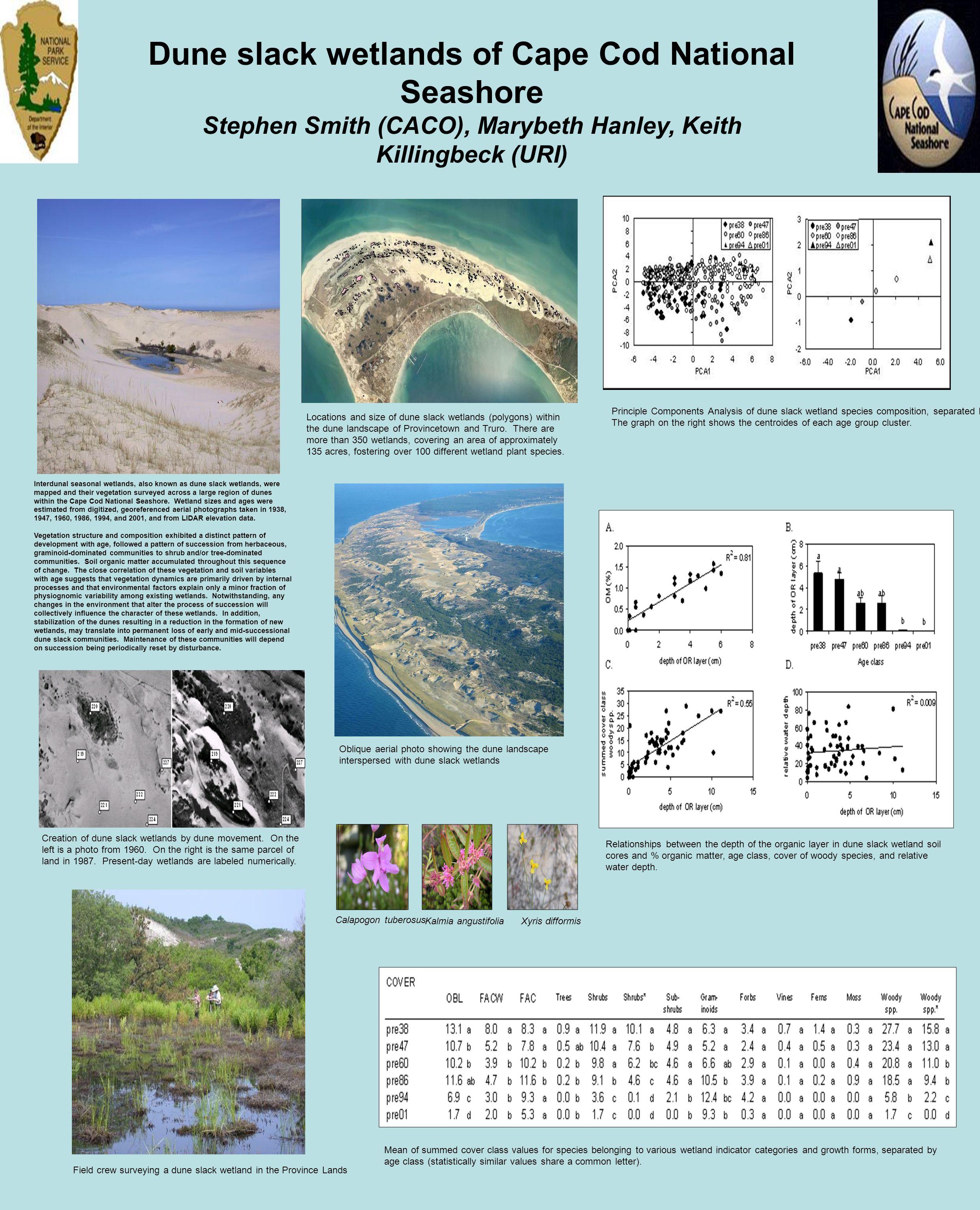 Dune slack wetlands of Cape Cod National Seashore Stephen Smith (CACO), Marybeth Hanley, Keith Killingbeck (URI) Interdunal seasonal wetlands, also kn