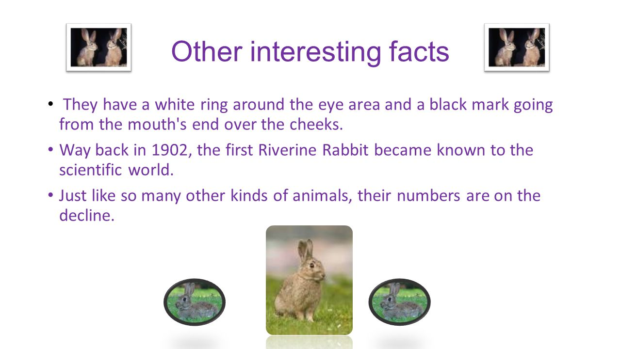Other interesting facts They have a white ring around the eye area and a black mark going from the mouth s end over the cheeks.