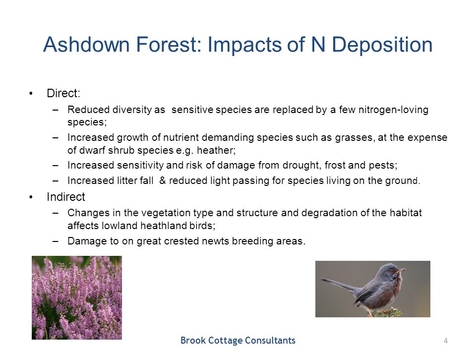 Ashdown Forest: Impacts of N Deposition Direct: –Reduced diversity as sensitive species are replaced by a few nitrogen-loving species; –Increased grow