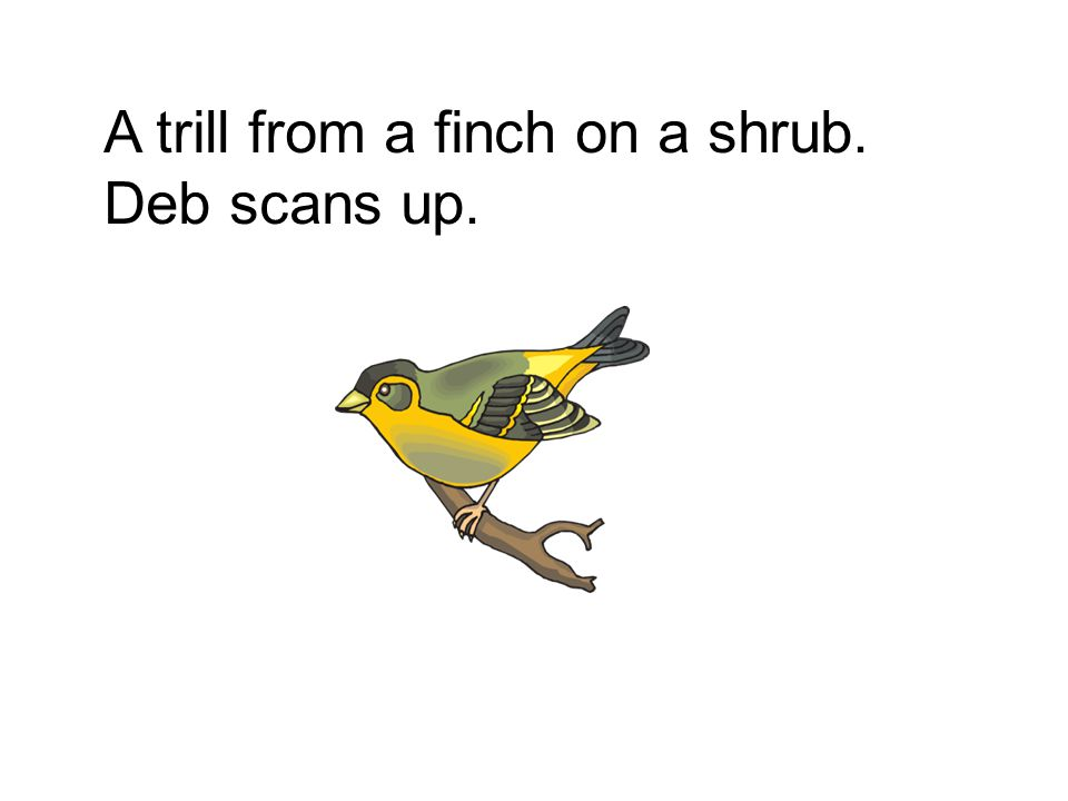 A trill from a finch on a shrub. Deb scans up.