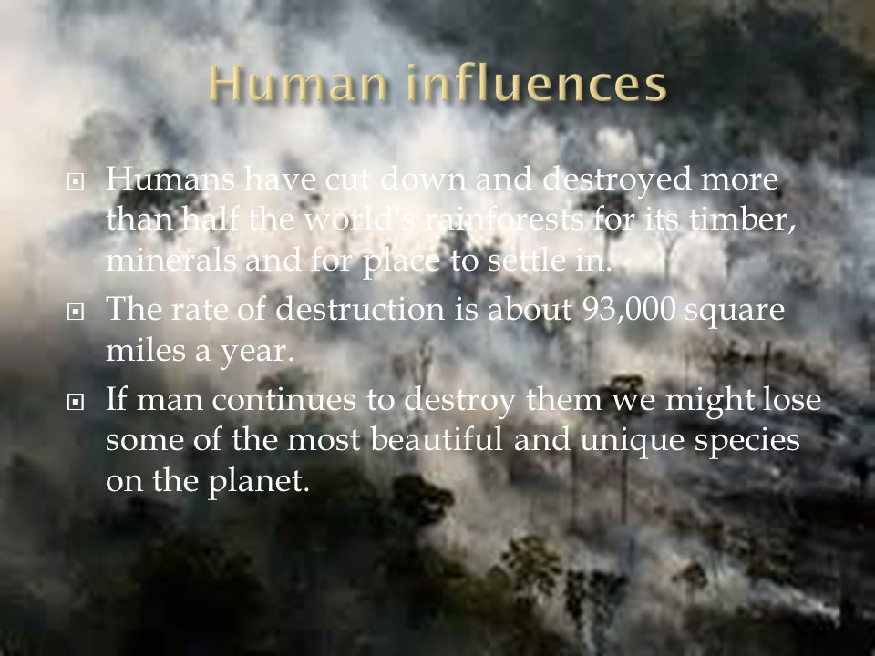 Humans have cut down and destroyed more than half the world s rainforests for its timber, minerals and for place to settle in.