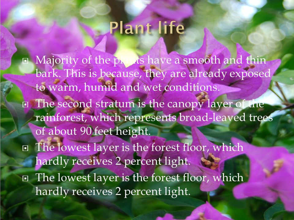  Majority of the plants have a smooth and thin bark.