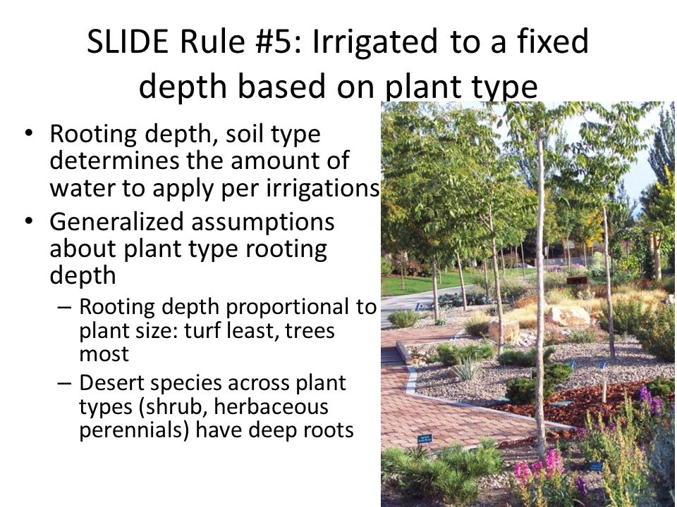 SLIDE Rule #5: Irrigated to a fixed depth based on plant type Rooting depth, soil type determines the amount of water to apply per irrigations Generalized assumptions about plant type rooting depth – Rooting depth proportional to plant size: turf least, trees most – Desert species across plant types (shrub, herbaceous perennials) have deep roots