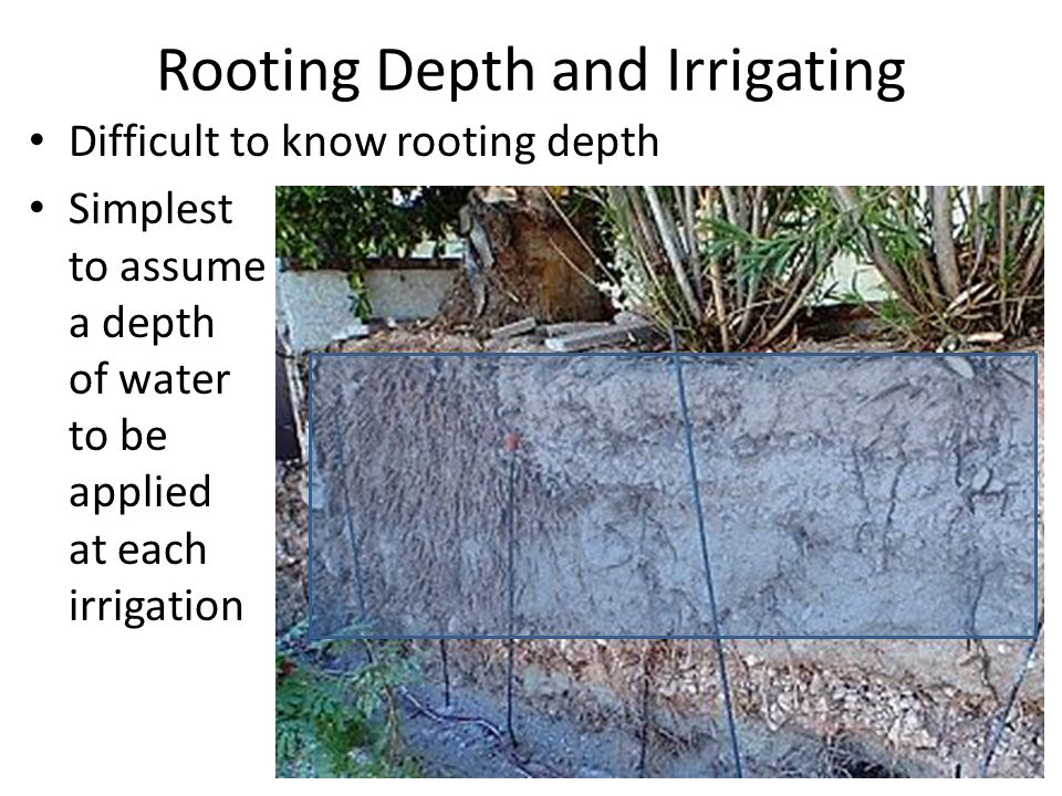 Rooting Depth and Irrigating Difficult to know rooting depth Simplest to assume a depth of water to be applied at each irrigation