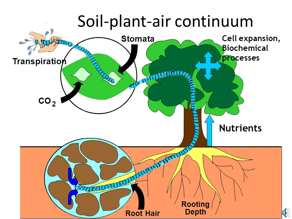5 Soil-plant-air continuum Rooting Depth Transpiration Root Hair Stomata 2 CO Nutrients Cell expansion, Biochemical processes