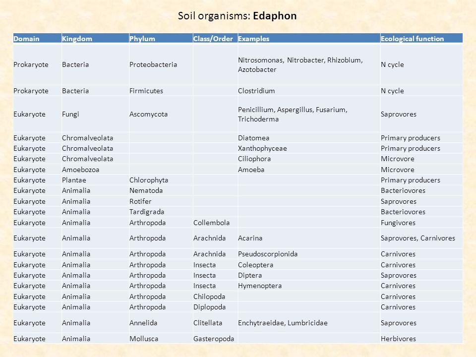 Soil organisms: Edaphon DomainKingdomPhylumClass/OrderExamplesEcological function ProkaryoteBacteriaProteobacteria Nitrosomonas, Nitrobacter, Rhizobium, Azotobacter N cycle ProkaryoteBacteriaFirmicutes ClostridiumN cycle EukaryoteFungiAscomycota Penicillium, Aspergillus, Fusarium, Trichoderma Saprovores EukaryoteChromalveolata DiatomeaPrimary producers EukaryoteChromalveolata XanthophyceaePrimary producers EukaryoteChromalveolata CiliophoraMicrovore EukaryoteAmoebozoa AmoebaMicrovore EukaryotePlantaeChlorophyta Primary producers EukaryoteAnimaliaNematoda Bacteriovores EukaryoteAnimaliaRotifer Saprovores EukaryoteAnimaliaTardigrada Bacteriovores EukaryoteAnimaliaArthropodaCollembola Fungivores EukaryoteAnimaliaArthropodaArachnidaAcarinaSaprovores, Carnivores EukaryoteAnimaliaArthropodaArachnidaPseudoscorpionidaCarnivores EukaryoteAnimaliaArthropodaInsectaColeopteraCarnivores EukaryoteAnimaliaArthropodaInsectaDipteraSaprovores EukaryoteAnimaliaArthropodaInsectaHymenopteraCarnivores EukaryoteAnimaliaArthropodaChilopoda Carnivores EukaryoteAnimaliaArthropodaDiplopoda Carnivores EukaryoteAnimaliaAnnelidaClitellataEnchytraeidae, LumbricidaeSaprovores EukaryoteAnimaliaMolluscaGasteropoda Herbivores