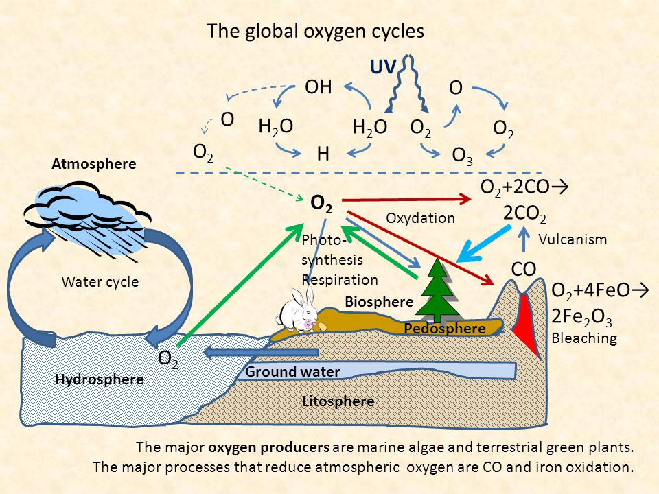 Local and global flux of matter in the biosphere Global cycles of main elements: C, N, O, H Consumers Plants Litter Decom- posers Soil Local cycles of P and of trace elements: K, Ca, Mg, Cu, Zn, B, Cl, Mo, Mn, Fe Consumers Plants Litter Decom- posers Soil Bacteria Atmos- phere