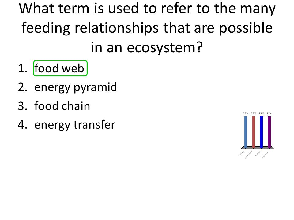 What term is used to refer to the many feeding relationships that are possible in an ecosystem? 1.food web 2.energy pyramid 3.food chain 4.energy tran