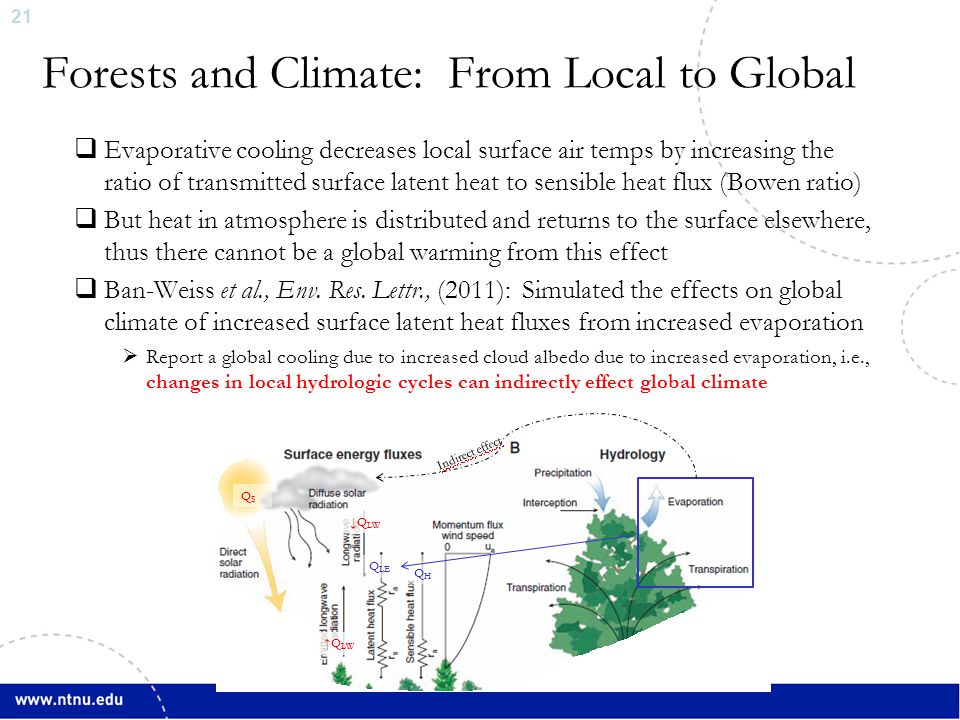 21 Forests and Climate: From Local to Global  Evaporative cooling decreases local surface air temps by increasing the ratio of transmitted surface la