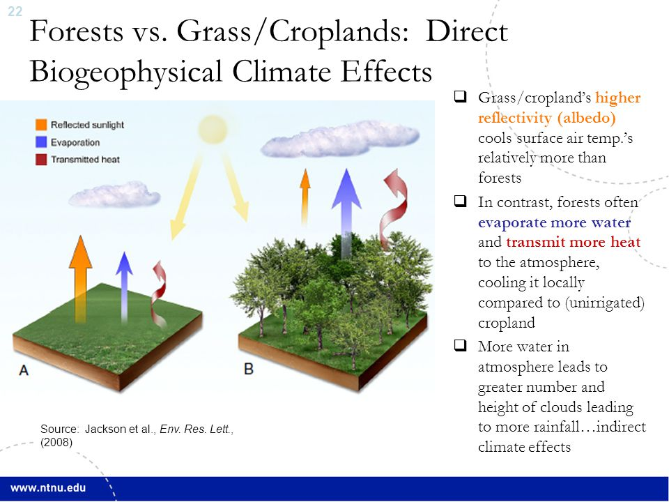 22 Forests vs. Grass/Croplands: Direct Biogeophysical Climate Effects  Grass/cropland's higher reflectivity (albedo) cools surface air temp.'s relati