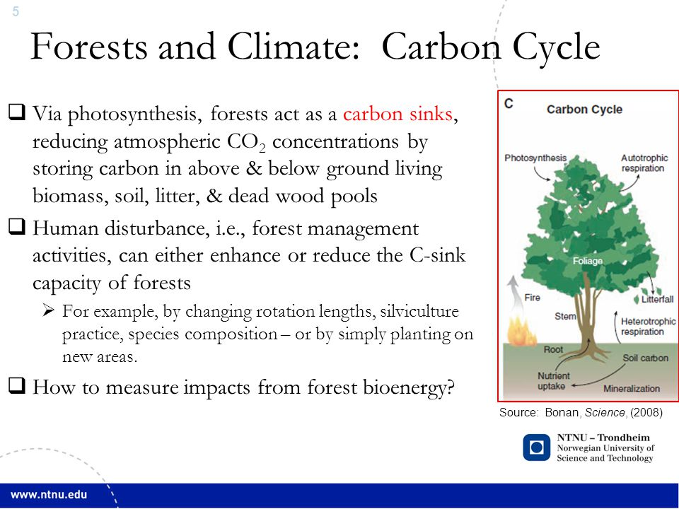 5 Forests and Climate: Carbon Cycle Source: Bonan, Science, (2008)  Via photosynthesis, forests act as a carbon sinks, reducing atmospheric CO 2 concentrations by storing carbon in above & below ground living biomass, soil, litter, & dead wood pools  Human disturbance, i.e., forest management activities, can either enhance or reduce the C-sink capacity of forests  For example, by changing rotation lengths, silviculture practice, species composition – or by simply planting on new areas.