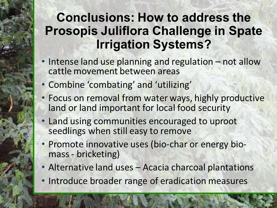 Conclusions: How to address the Prosopis Juliflora Challenge in Spate Irrigation Systems? Intense land use planning and regulation – not allow cattle