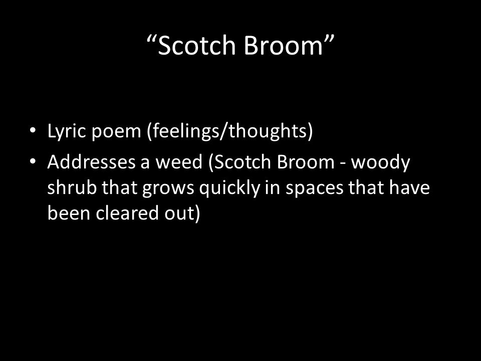 """""""Scotch Broom"""" Lyric poem (feelings/thoughts) Addresses a weed (Scotch Broom - woody shrub that grows quickly in spaces that have been cleared out)"""