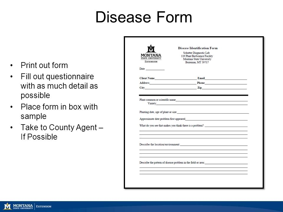 Disease Form Print out form Fill out questionnaire with as much detail as possible Place form in box with sample Take to County Agent – If Possible