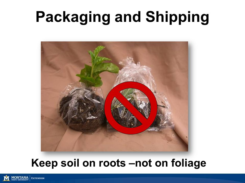 Packaging and Shipping Keep soil on roots –not on foliage