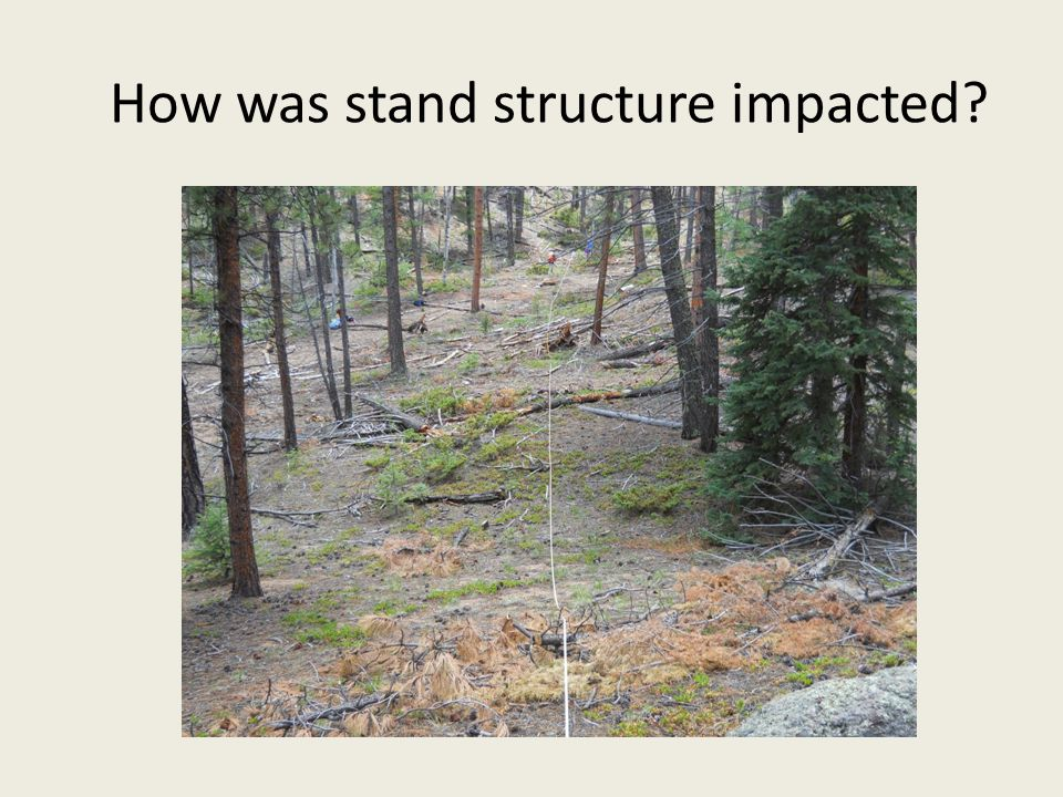 How was stand structure impacted