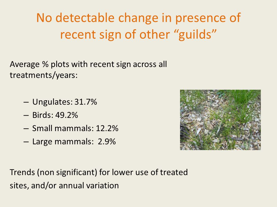 No detectable change in presence of recent sign of other guilds Average % plots with recent sign across all treatments/years: – Ungulates: 31.7% – Birds: 49.2% – Small mammals: 12.2% – Large mammals: 2.9% Trends (non significant) for lower use of treated sites, and/or annual variation