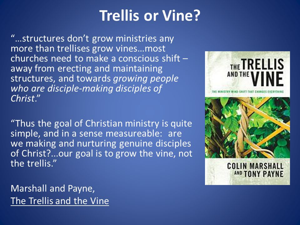 Trellis or Vine.
