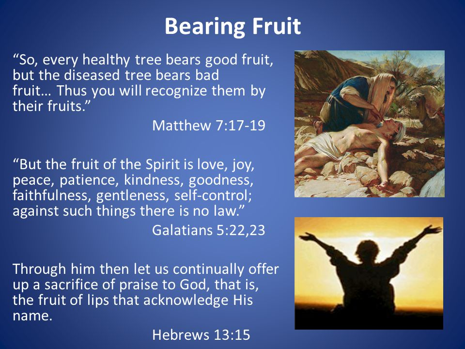 Bearing Fruit So, every healthy tree bears good fruit, but the diseased tree bears bad fruit… Thus you will recognize them by their fruits. Matthew 7:17-19 But the fruit of the Spirit is love, joy, peace, patience, kindness, goodness, faithfulness, gentleness, self-control; against such things there is no law. Galatians 5:22,23 Through him then let us continually offer up a sacrifice of praise to God, that is, the fruit of lips that acknowledge His name.