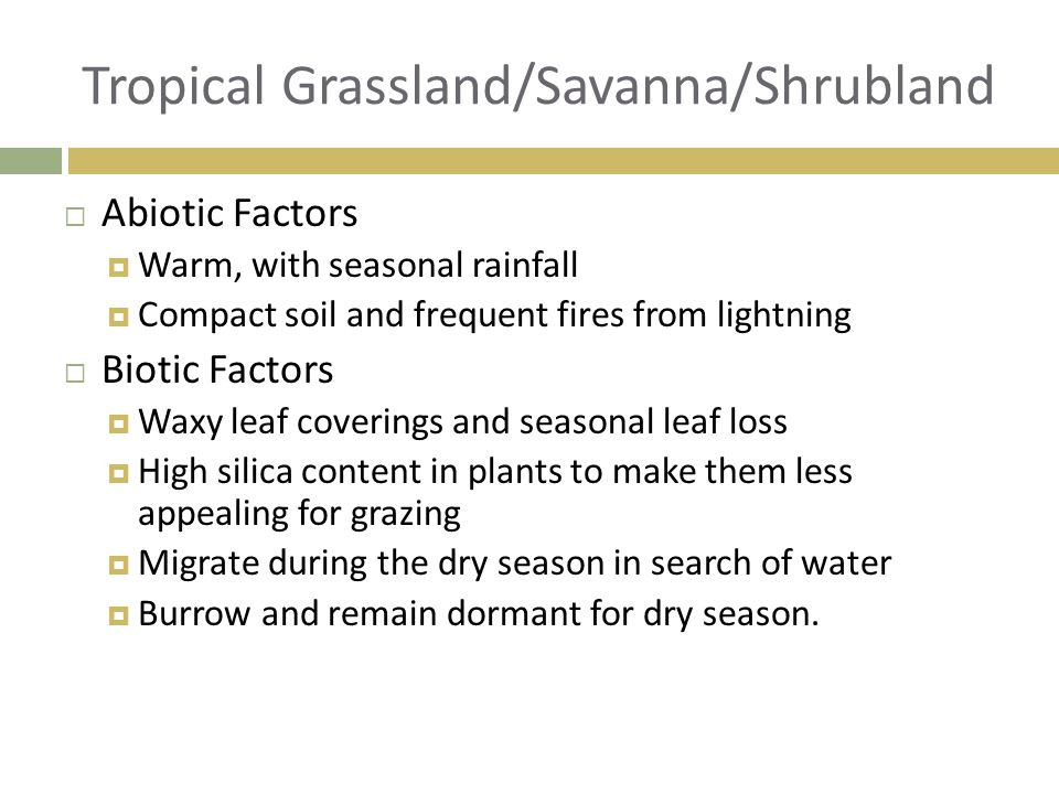  Abiotic Factors  Warm, with seasonal rainfall  Compact soil and frequent fires from lightning  Biotic Factors  Waxy leaf coverings and seasonal