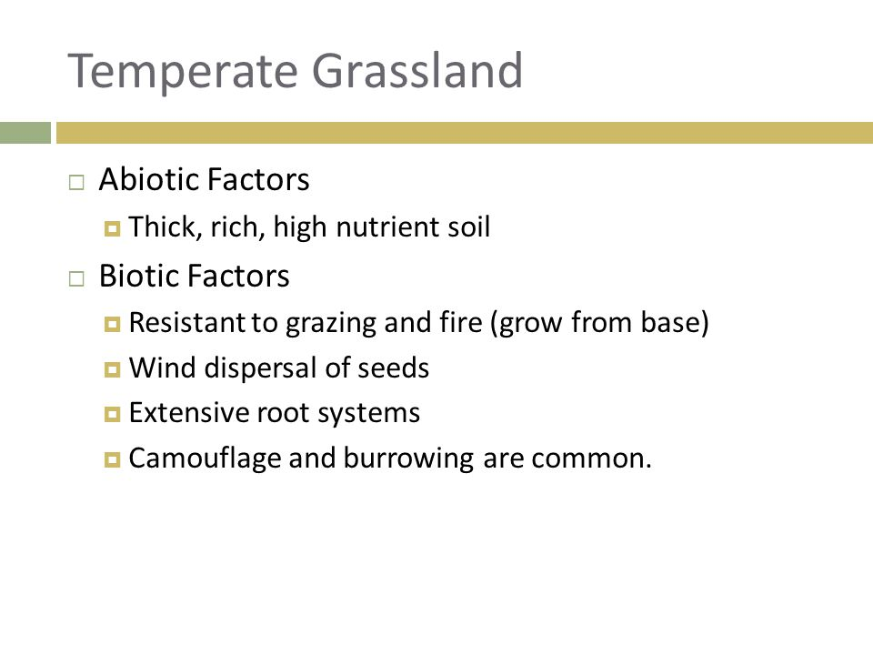  Abiotic Factors  Thick, rich, high nutrient soil  Biotic Factors  Resistant to grazing and fire (grow from base)  Wind dispersal of seeds  Exte