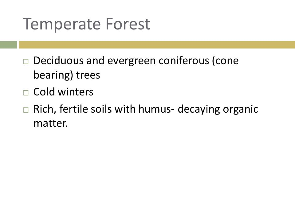 Temperate Forest  Deciduous and evergreen coniferous (cone bearing) trees  Cold winters  Rich, fertile soils with humus- decaying organic matter.
