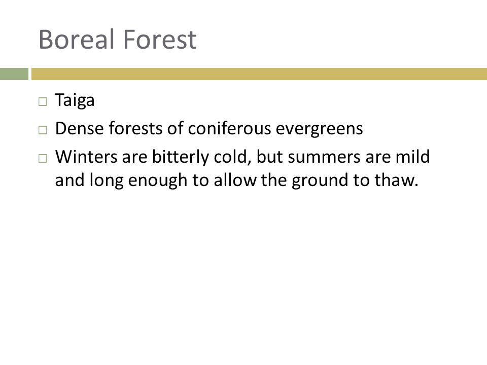 Boreal Forest  Taiga  Dense forests of coniferous evergreens  Winters are bitterly cold, but summers are mild and long enough to allow the ground t