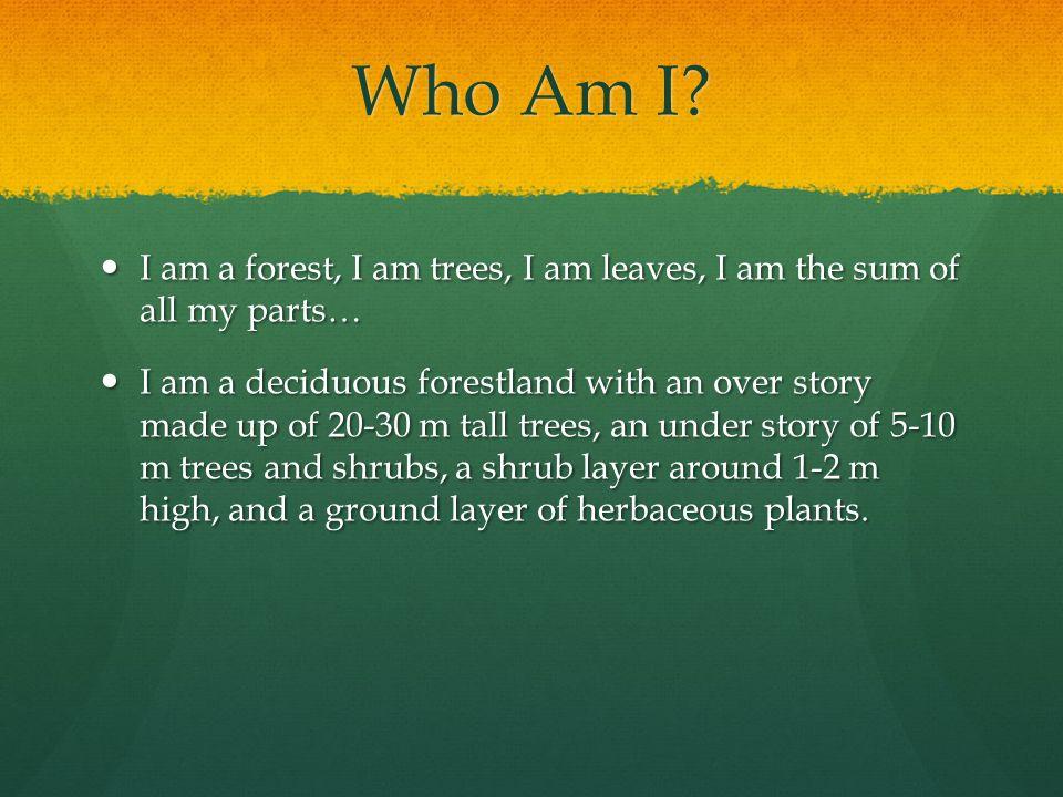 Who Am I? I am a forest, I am trees, I am leaves, I am the sum of all my parts… I am a forest, I am trees, I am leaves, I am the sum of all my parts…