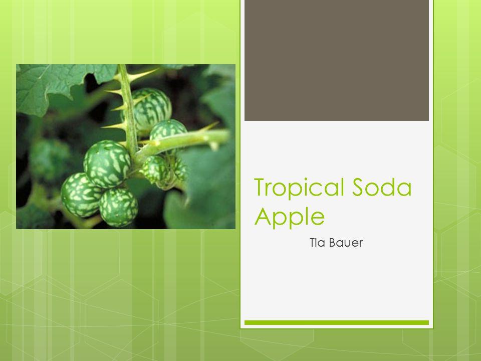 Tropical Soda Apple Tia Bauer