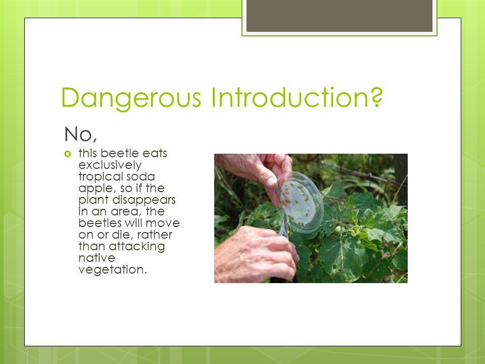 Dangerous Introduction.