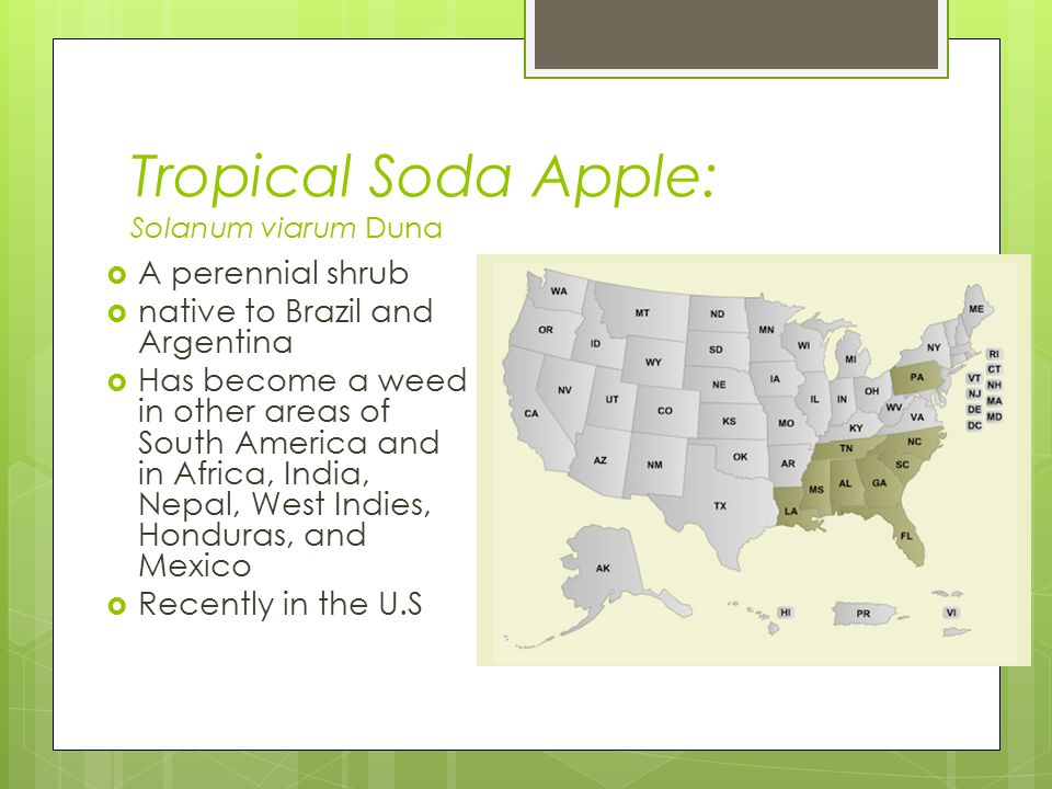 Does anything work. Chemical : Chemical controls can be effective for tropical soda apple.