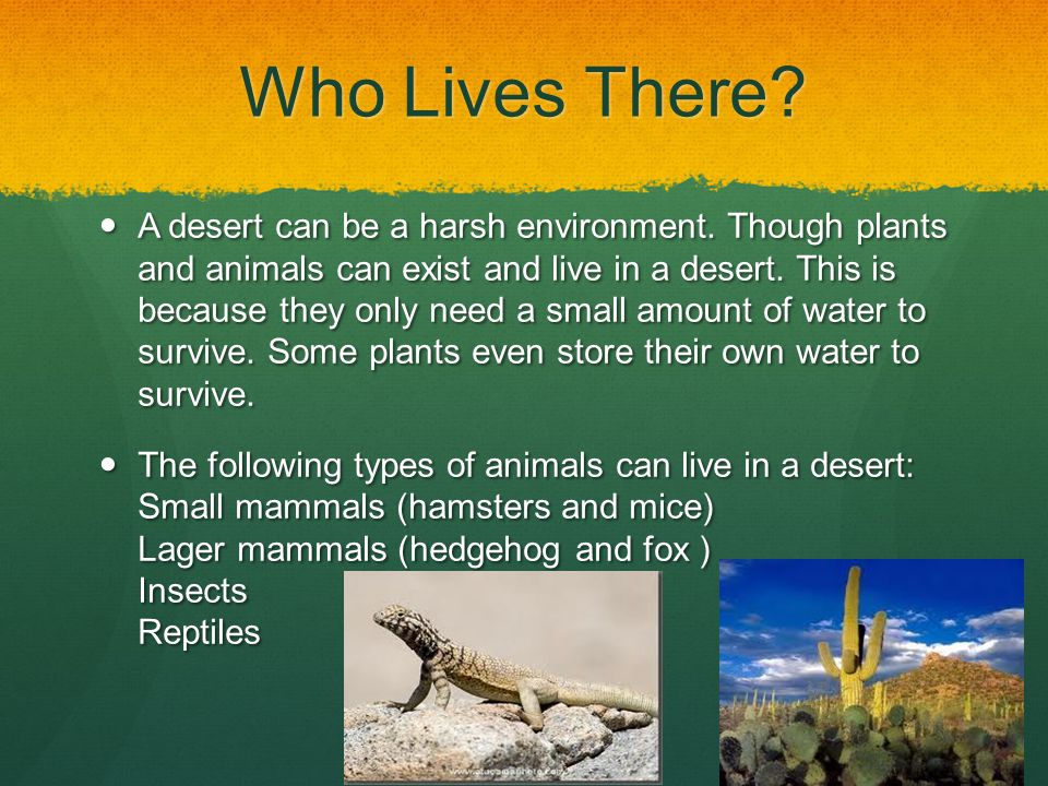 Who Lives There? A desert can be a harsh environment. Though plants and animals can exist and live in a desert. This is because they only need a small