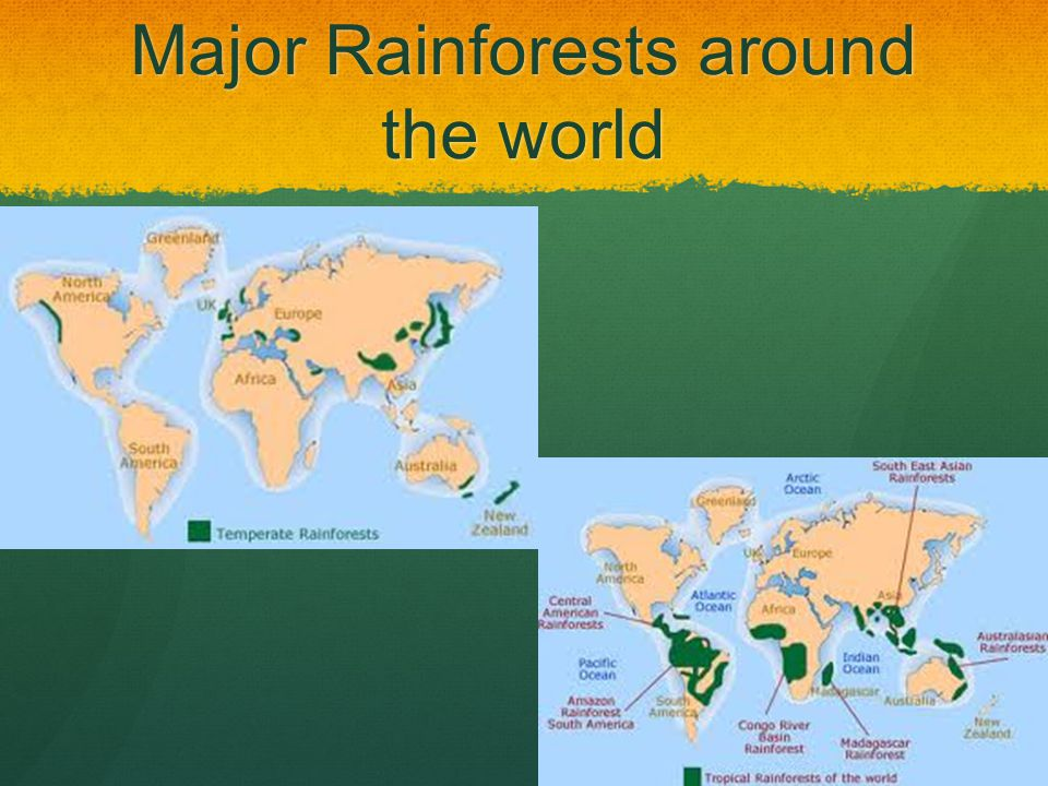 Major Rainforests around the world