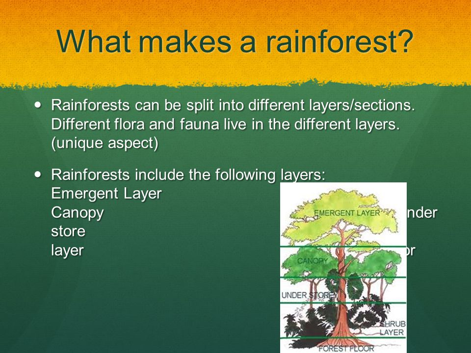 What makes a rainforest. Rainforests can be split into different layers/sections.