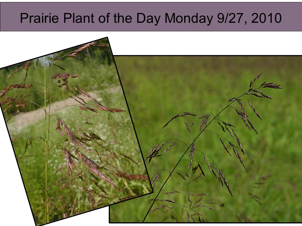 Plant of the Day Friday 9/17/2010