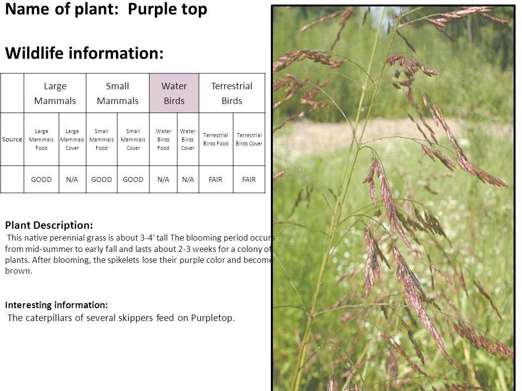 Name of Plant: Wild Raspberry Wildlife Habitat Values: Description: Fruits and canes.