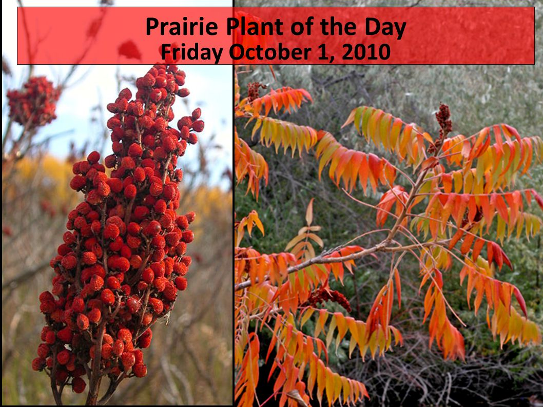 Plant of the day Tuesday 9/14/2010